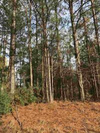 Home for sale: Scr 83 0, Mize, MS 39116
