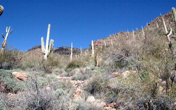 43224 N. 79th St., Cave Creek, AZ 85331 Photo 30