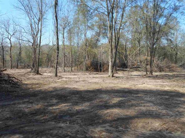 16.9 Acres Private Rd. 1363, Ariton, AL 36311 Photo 17