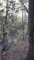 Home for sale: Tbd County Rd. 474, Kinston, AL 36453