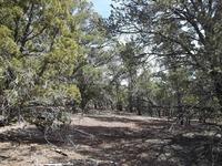 Home for sale: Lot 286 3135 / Highland Dr., Vernon, AZ 85940