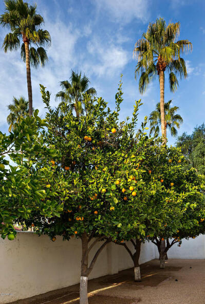 8672 N. 64th Pl., Paradise Valley, AZ 85253 Photo 18