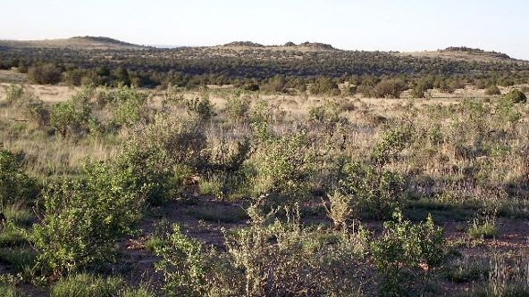 6787 S. Rising Sun Rd., Williams, AZ 86046 Photo 2