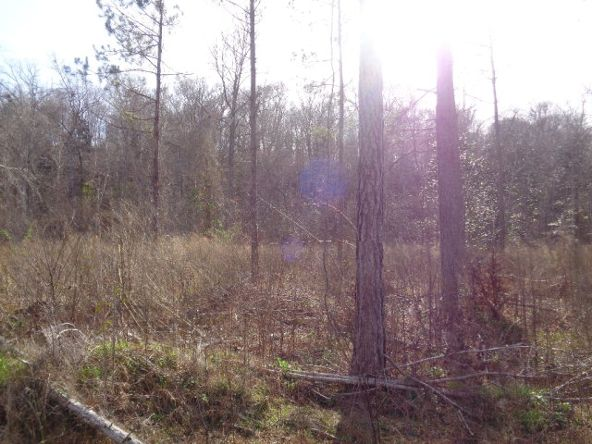 275+/-Ac Cty Rd. 46/Cty Rd 97, Abbeville, AL 36310 Photo 38