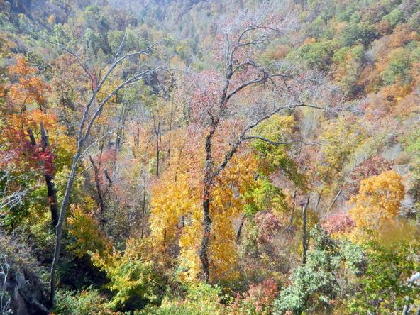 526 County Rd. 139, Bryant, AL 35958 Photo 127