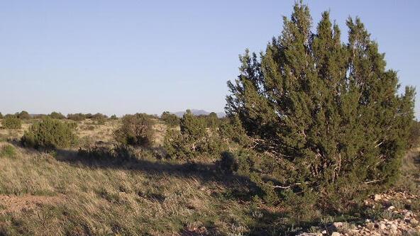 6787 S. Rising Sun Rd., Williams, AZ 86046 Photo 6