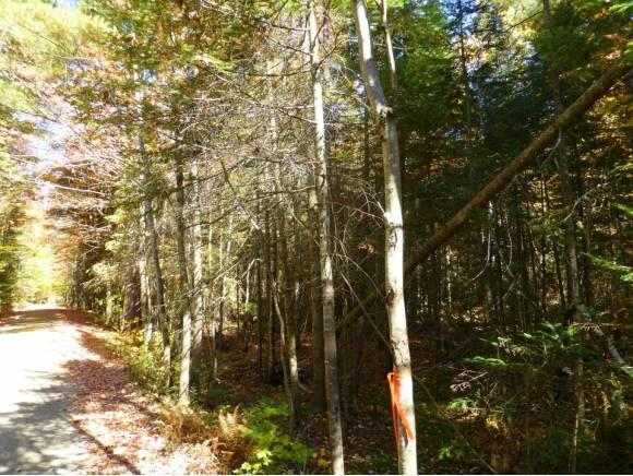 Lot #6 Woodland Dr., North Troy, VT 05859 Photo 6