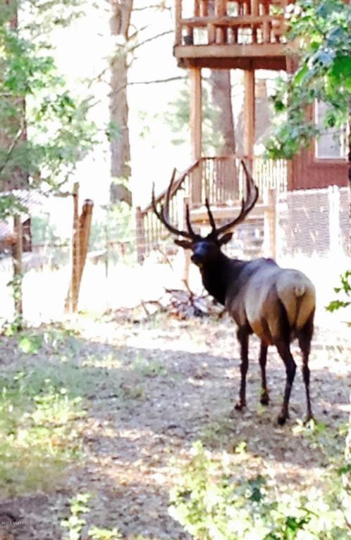 82 Deer Trail, Mormon Lake, AZ 86038 Photo 6
