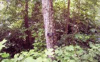 Home for sale: Lot27 Thundering Hill, Murphy, NC 28906