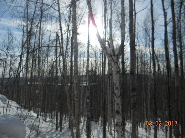 207 Eagle Ridge Rd., Fairbanks, AK 99712 Photo 1