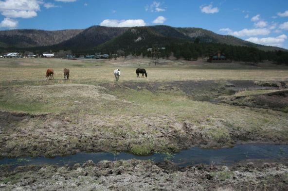 14 Cr 2155, Alpine, AZ 85920 Photo 108