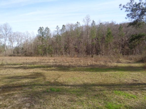 275+/-Ac Cty Rd. 46/Cty Rd 97, Abbeville, AL 36310 Photo 48
