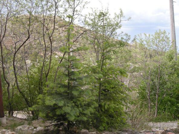 12949 N. Guthrie, Mount Lemmon, AZ 85619 Photo 69