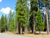 Home for sale: 33 Black Bear Trail, Clio, CA 96106