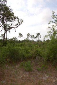 Home for sale: Parcel 6 175th St., Trenton, FL 32693