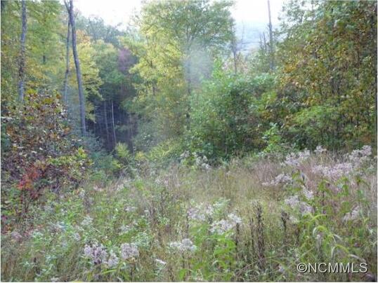 16 Briggs, Robbinsville, NC 28771 Photo 7