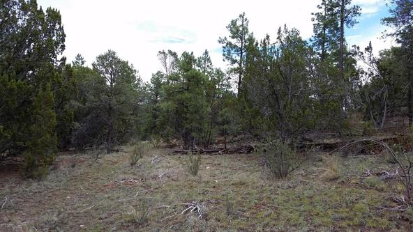 15.64 Ac Near Airport, Overgaard, AZ 85933 Photo 13