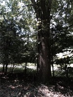 Home for sale: 0 Rigsbys Ridge, Lynchburg, TN 37352