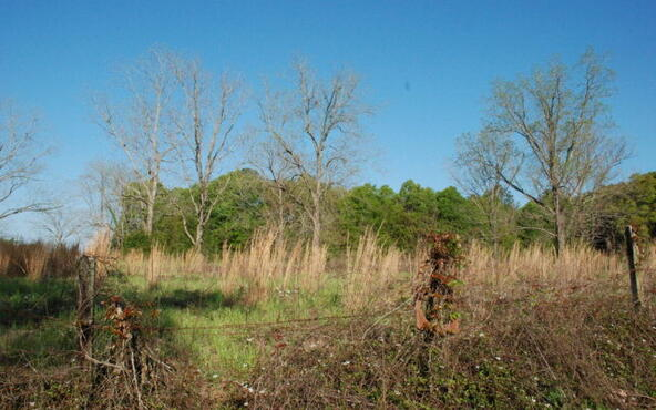 6.2 Ac Us Hwy. 84 W., River Falls, AL 36474 Photo 7