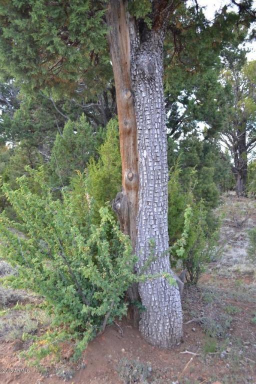 1524 Rocky Top Dr., Heber, AZ 85928 Photo 27