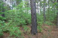 Home for sale: Sumrall, MS 39482
