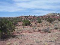 Home for sale: Lot 214 River Springs Ranch, Saint Johns, AZ 85936