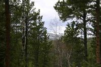 Home for sale: Tbd Lot 47 Snowcat Rd., Lead, SD 57754