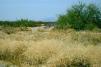 Home for sale: 0 N. 403rd Avenue, Tonopah, AZ 85354