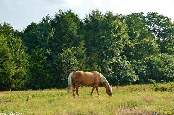 550 Locust St., Quitman, AR 72131 Photo 5