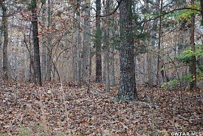 00 Roby Rd., Jacks Creek, TN 38347 Photo 9