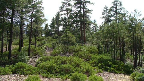 1720 S. Pleasant View Dr., Show Low, AZ 85901 Photo 2