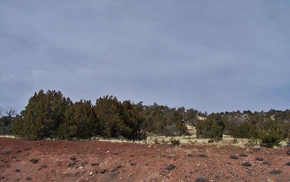 1843 E. Sagebrush Rd., Williams, AZ 86046 Photo 5