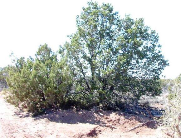 3894 Valley Rd., Snowflake, AZ 85937 Photo 4