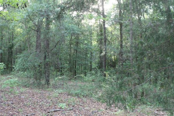 30191 Hollinger Creek Dr., Robertsdale, AL 36567 Photo 6