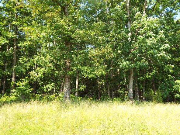 565 Cat Hollow Rd., Elk Horn, KY 42733 Photo 12