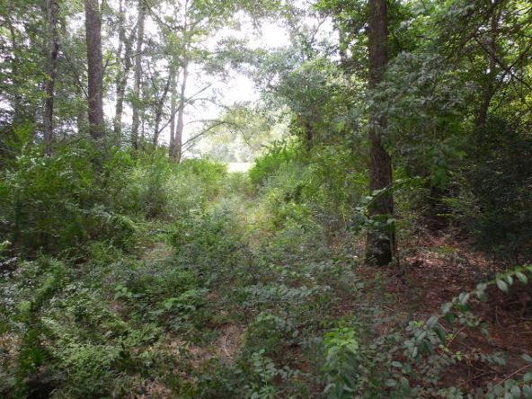 5 Acres Hwy. 103, Slocomb, AL 36375 Photo 7
