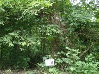 Home for sale: Lot 37 Gannaway Rd., Leitchfield, KY 42754