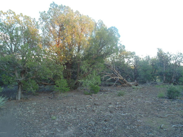 43600 N. Moonshine Rd., Seligman, AZ 86337 Photo 4