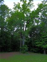 Home for sale: Lot S.-78 Old Susanna Rd., Dadeville, AL 36853
