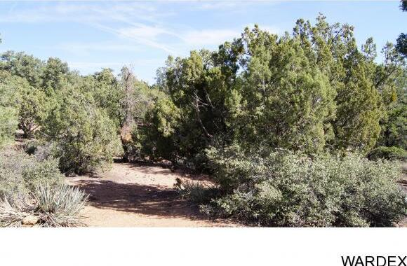 9999 N. Trap Springs Rd., Hackberry, AZ 86411 Photo 6