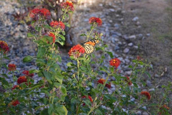 14131 W. Greentree Dr. S., Litchfield Park, AZ 85340 Photo 47