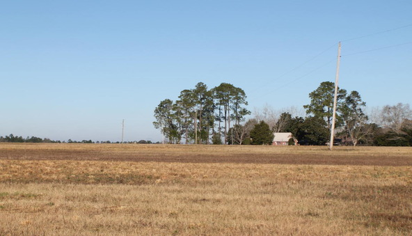 10.9 Ac Vinson Ray Rd., Baker, FL 32531 Photo 4