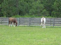 Home for sale: 26711 Leeward St., Eustis, FL 32736