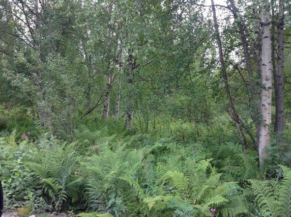 9738 E. Susitna Rd., Trapper Creek, AK 99683 Photo 2