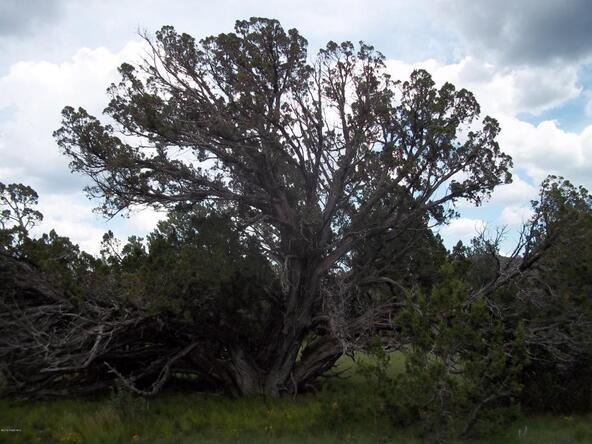 184 E. Bald Eagle Ln., Williams, AZ 86046 Photo 4