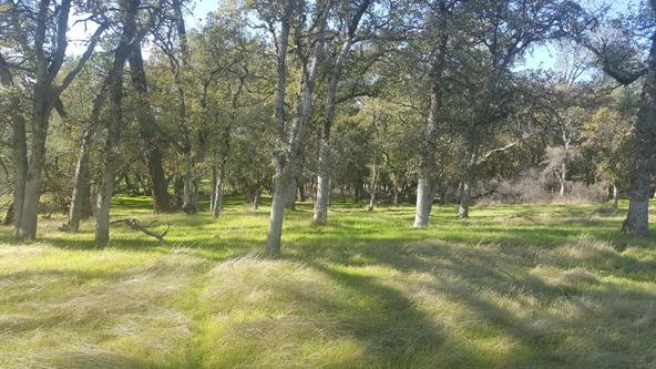 Basin Hollow, Millville, CA 96062 Photo 17