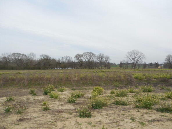 7 Acres Hardy Rd., Rehobeth, AL 36301 Photo 24