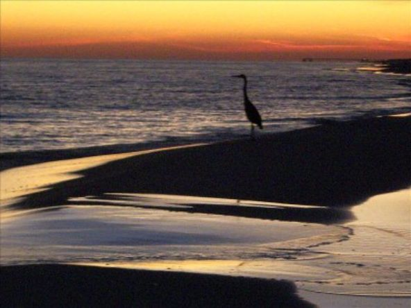 24568 Perdido Beach Blvd., Orange Beach, AL 36561 Photo 13