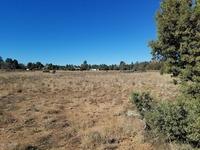 Home for sale: 2651 Alisa Ln., Lakeside, AZ 85929