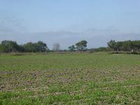 Home for sale: Nn Mile 5 1/2 N., Weslaco, TX 78596